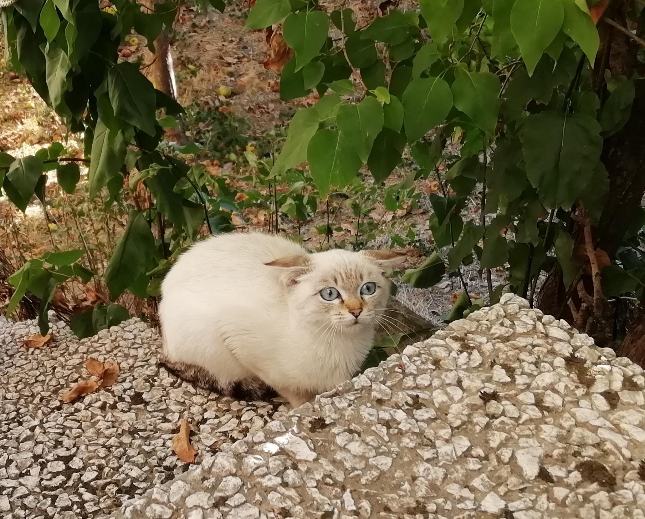 Scaredy-cat in Nanclares